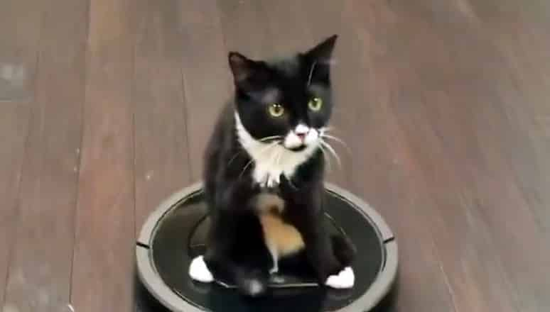 roomba-gatto