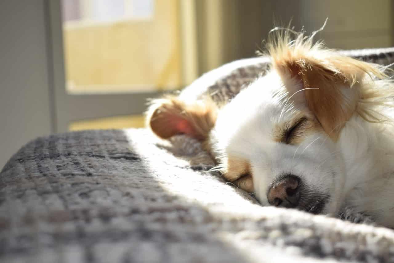 Cucce Piccole Per Cani 🥇 5 migliori cucce per cani 2020 (meravigliose) – pro contro